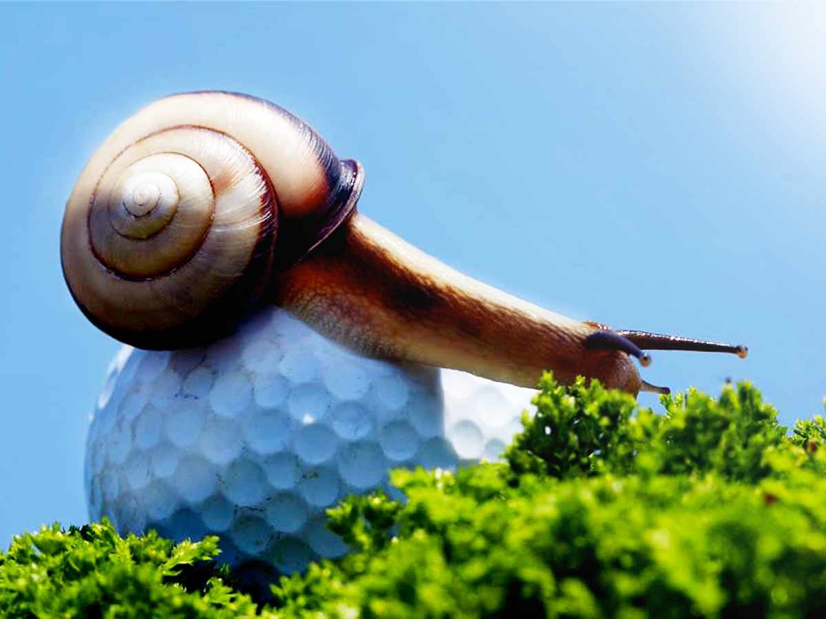 golf_tips_quanto_dura_una_partita_di_golf_slow_play_snail